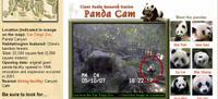 Catch_the_panda